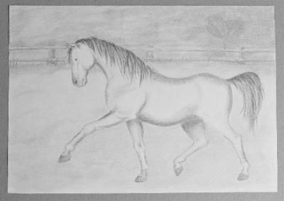 http://www.verkoopjehobby.nl/article_details.php?article_id=1326&sp=0&np=p50&op=0&order_by=&srt_art=2&mid=&alt=hobby_tekeningen__Paard