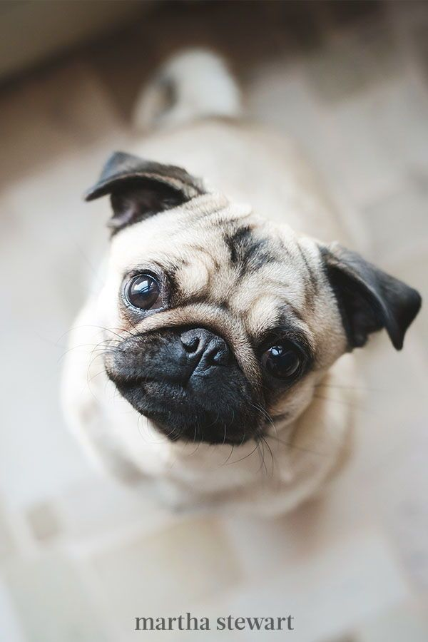 10 Overlooked Dog Breeds That Make For Great Family Pets In 2020 Dog Breeds Family Dogs Breeds Dogs