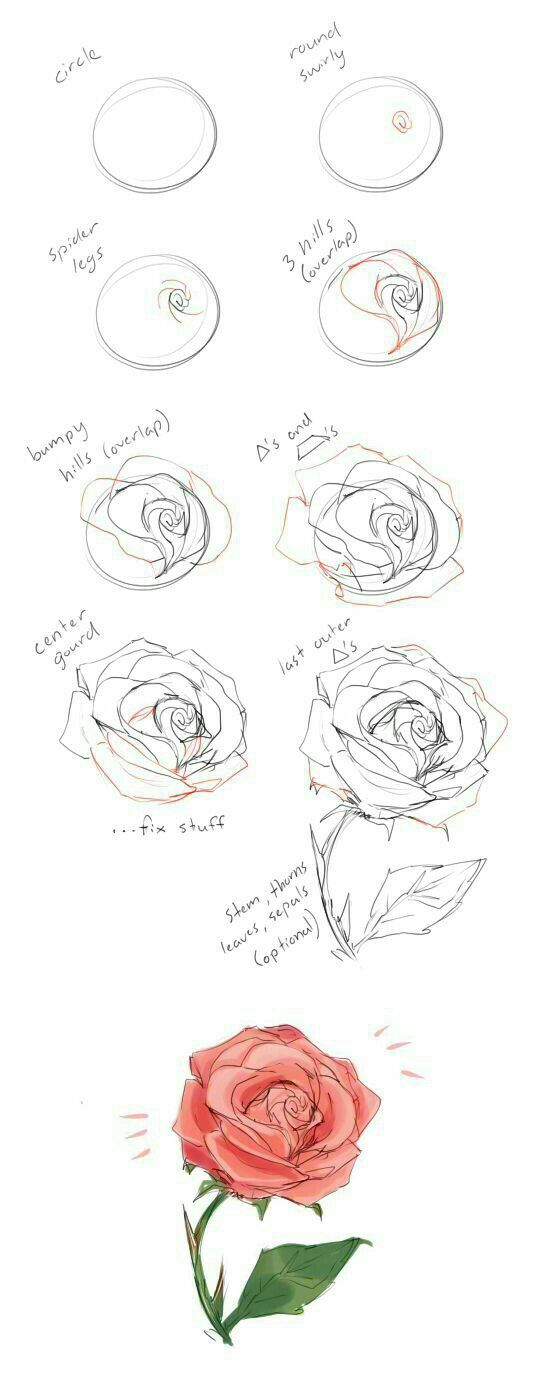How To Draw Rose Roses Tutorial