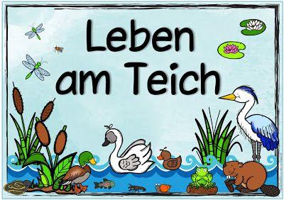 "Ideenreise: Themenplakat ""Leben am Teich"""