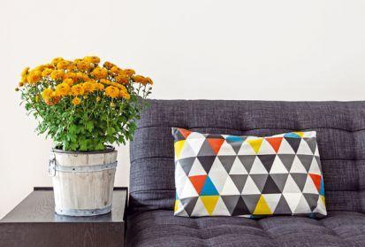 14 rastlín účinnných proti bytovej chémii