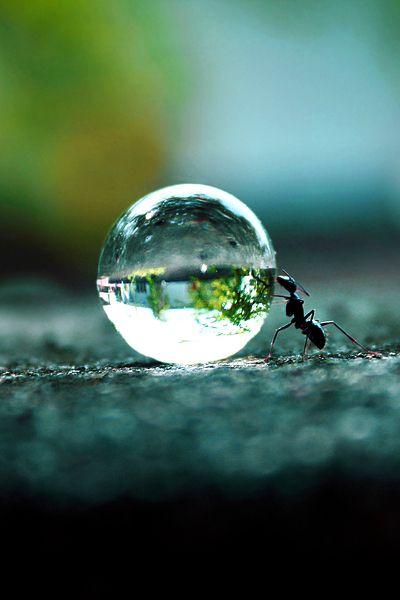 ¡Hurra! Uno de mis hormigas ya está caminando y que puede también hacer cosas como mover esta gota de agua que cayó esta mañana!