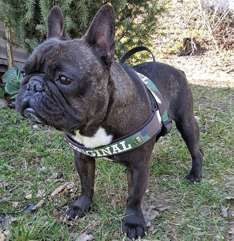 Exclusive, completely hand-made CRTL branded Harness specifically for the French Bulldogs! Limited edition high-precision stitching, premium and comfortable materials, extremely detailed workmanship, uncompromising durability and quality- is an ultimate harness Cartel Original for a member of your family-your little frenchie. Available on store right now! #tattoo #tatto #tattooed #tattoos #tattoolife #tattoolove #premiumbranded #premiumquality #ink #inked #inkedlife #inkstagram #onlinestore…