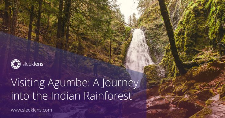 A photography journey to Agumbe.