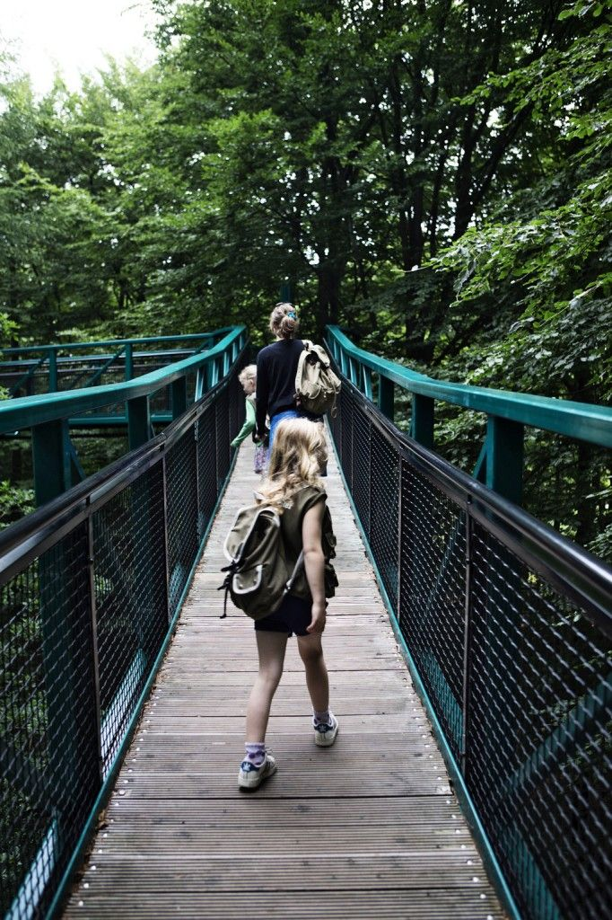 Drenthe- de boom in - Dingenzoekers - Boomkroonpad- op de toppen van de bomen wandelen op 22 Meter hoogte.