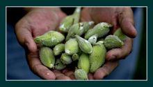 Grădina comestibilă | PlantePedia