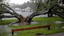 FORT LAUDERDALE, FL - SEPTEMBER 10:  High winds split a large tree in the Coral Beach neighborhood as Hurricane Irma hits the southern part of the state September 10, 2017 in Fort Lauderdale, Florida. The powerful hurricane made landfall in the United States in the Florida Keys at 9:10 a.m. after raking across the north coast of Cuba.  (Photo by Chip Somodevilla/Getty Images)