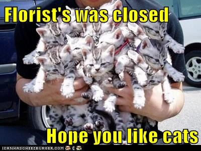 """""""Florist was closed, hope you like cats"""" (please all take note for my next bday - Nik)"""