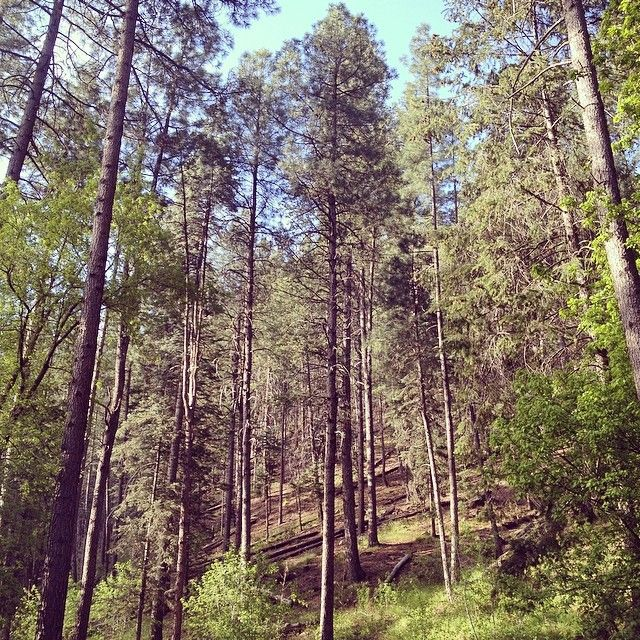 Camping Cabins National Forest Nm: 10 Best Great Campgrounds-Arizona Images On Pinterest