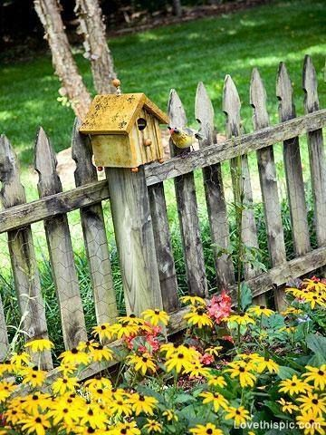 Yellow Birdhouse on Fence flowers garden yellow birdhouse black eyed susans