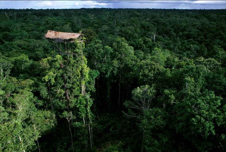 Abandoned Korowai treehouse in West Papua, Indonesia. Photo by George Steinmetz.: The View, Tree Houses, Treehouse, Trees Branches, Crazy Home, Trees House, Trees Home, Buildings House, Papua New Guinea
