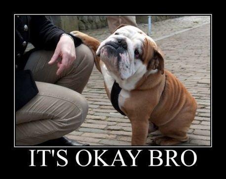 english bulldogs always make me laugh animal-funnies
