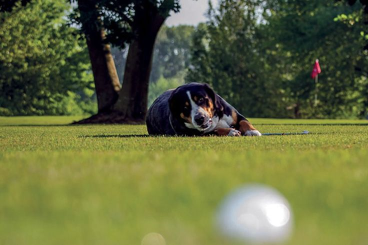 Pet-friendly Club - Golf Club Udine Italy