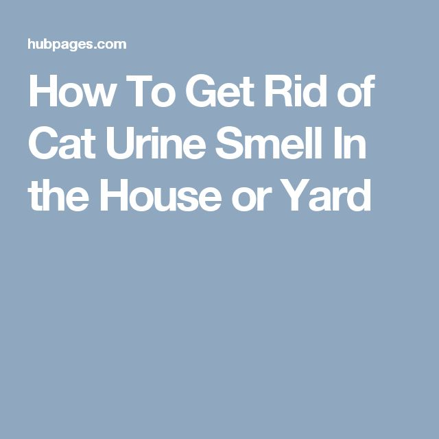 How To Get Rid Of Cat Urine Smell On Concrete Floors
