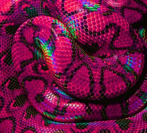 Iridescent Fuschia Snake