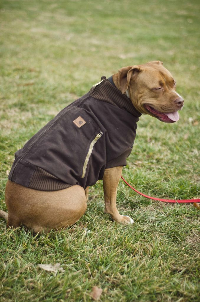 Very detailed instructions and pattern to turn an old coat into a great jacket for your dog.
