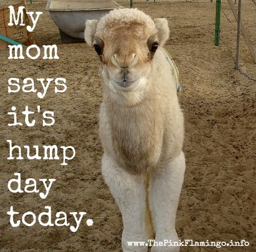 25 Best Images About Happy Humpday On Pinterest Do You