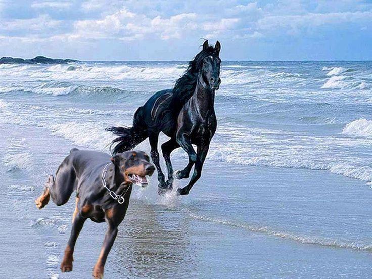 Фото с лошадью и собакой