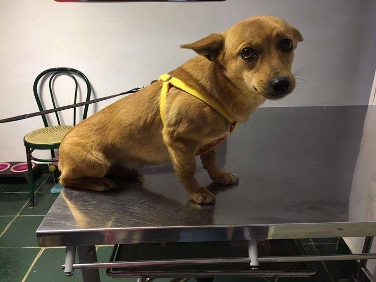 Hund, Mischling (Mischling, Hündin, 1,5 Jahre) Rumänien - Rozy sucht ein Zuhause!!!