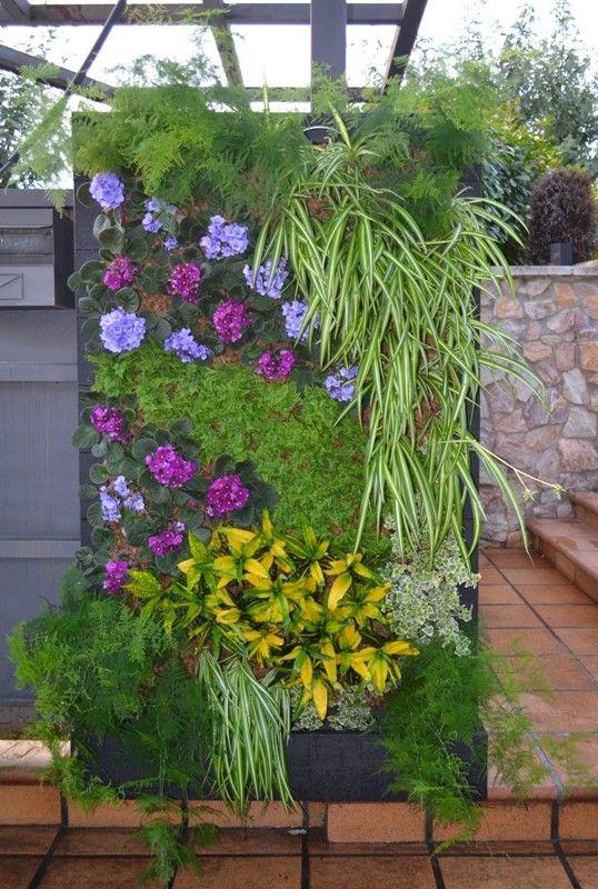 Plantas para jardín vertical interior 01 (Asparagus plumosus, Chlorophytum comosum, Codiaeum variegatum, Hedera helix mini, Nephrolepis exaltata, Saintpaulia ionatha).