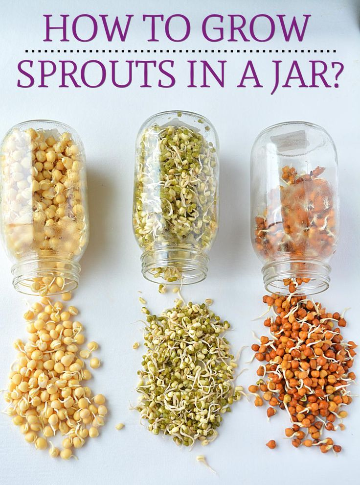 How to make Sprouts. Best Homemade Moong dal sprout.Growing Mung Bean Sprouts, How To Sprout Beans or Moong/Mung at home, How To Make Moong Bean Sprouts