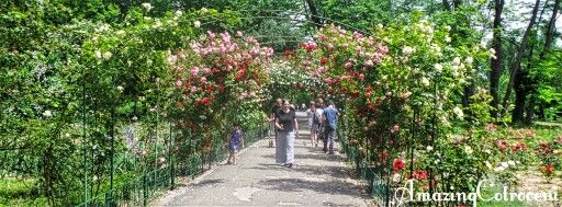 Roses alley