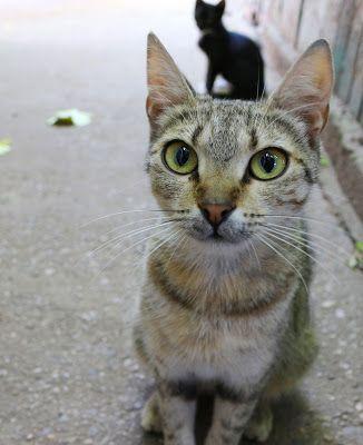World Through my Photos: CATS