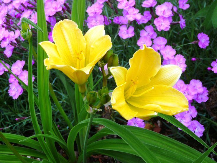 Ronzone, il mio giardino