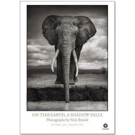 Affisch Nick Brandt 77 - Affischer