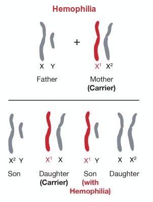 All definition of sex chromosome thanks for