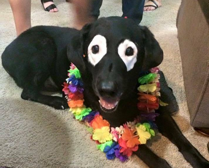 """Dog With Skin Condition Has A Face You Can't Forget 