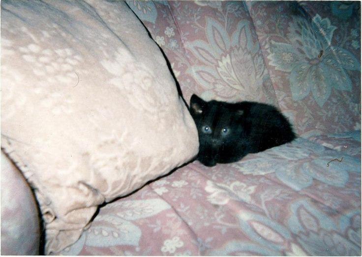Gemma, when she was a kitten