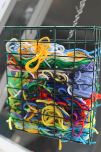 for a bird unit. Put yarn in a suet feeder and watch for your bright colored yarn in bird nests