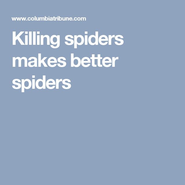Killing spiders makes better spiders