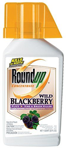 Best price on Roundup Concentrate Regional Wild Blackberry Vine and Brush Killer, 32-Oz (Only sold in OR, WA)  See details here: http://bestgardensreview.com/product/roundup-concentrate-regional-wild-blackberry-vine-and-brush-killer-32-oz-only-sold-in-or-wa/    Truly the best deal for the brand new Roundup Concentrate Regional Wild Blackberry Vine and Brush Killer, 32-Oz (Only sold in OR, WA)! Have a look at this low priced item, read customers' notes on Roundup Concentrate Regional Wild…
