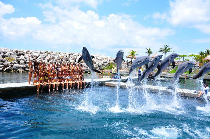 Las animadoras de los Pieles Rojas, posaron junto a nuestros hermosos delfines obteniendo como resultado esta increíble foto