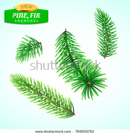 Set of fir branches, Christmas tree, pine tree. Symbol of ...