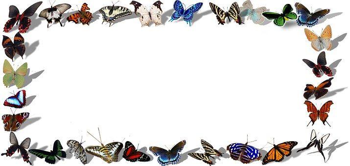 Frame, Vlinders, Decoratieve
