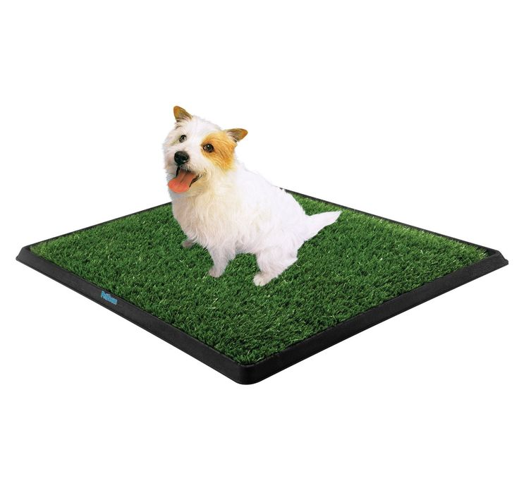 Dog Smell Of Rug: Best 25+ Dog Pee Pads Ideas On Pinterest