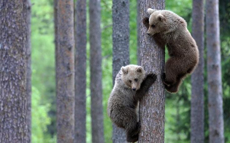 Piccoli fratelli orso | Wonderful Earth | http://www.wonderfulearth.net/2013/05/piccoli-fratelli-orso/