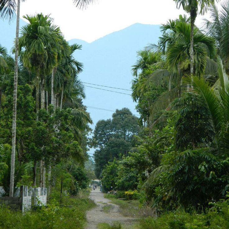 Pasaman Barat Desa Jambak utara