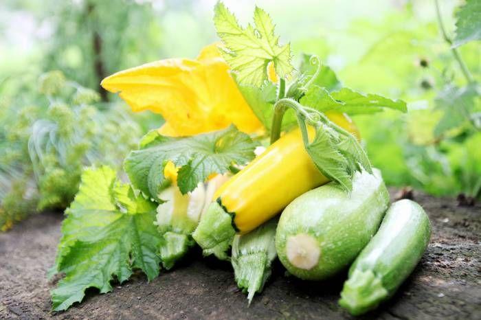 Πέντε καλοί λόγοι για να τρως κολοκύθια