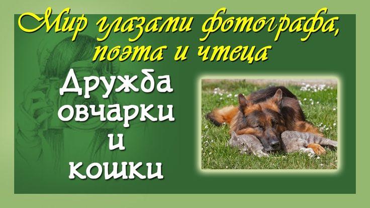 Стихи о животных Дружба кошки и собаки