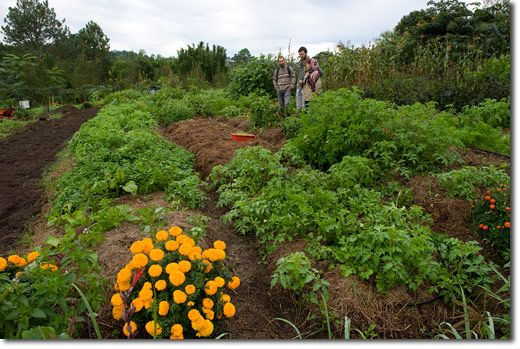 Zaytuna Farm Video Tour (Apr/May 2012) - Ten Years of (R)Evolutionary Design Permaculture Research Institute