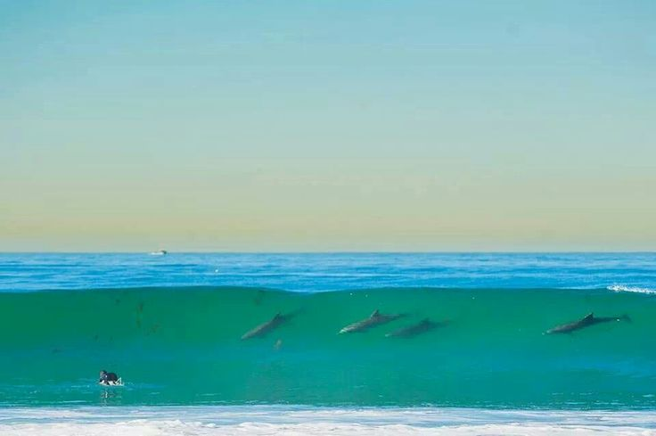 17 Best Images About San Diego Beaches On Pinterest The