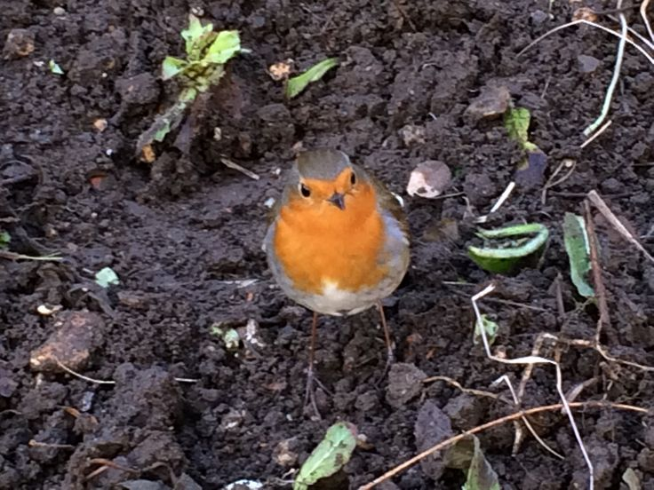 My little friend who helped me with the gardening in the glorious sunshine on Sunday