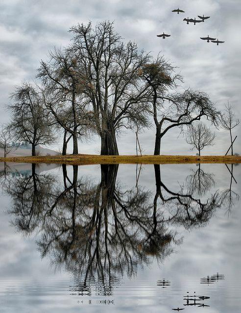 reflection                                                                                                                                                     Plus