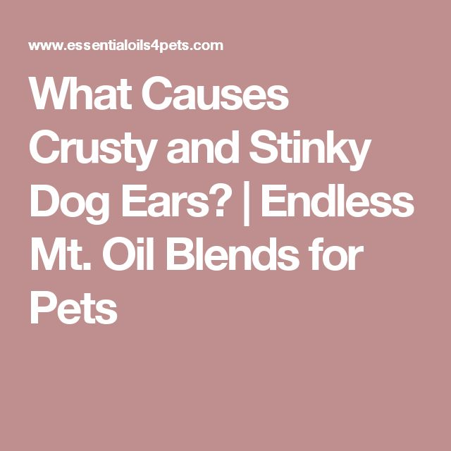 What Causes Crusty and Stinky Dog Ears? | Endless Mt. Oil Blends for Pets