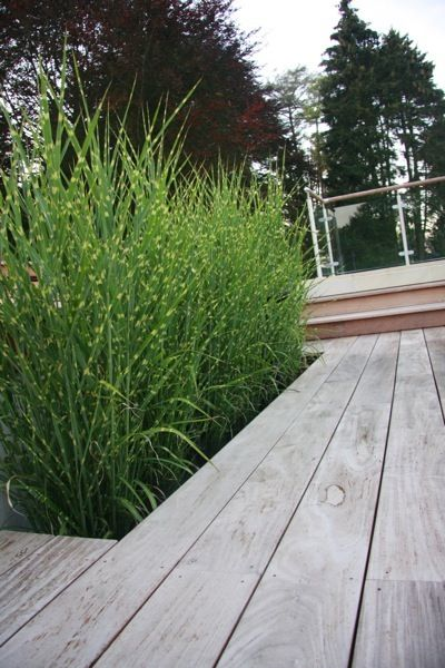 Ipe decking and grasses around a swimming pool