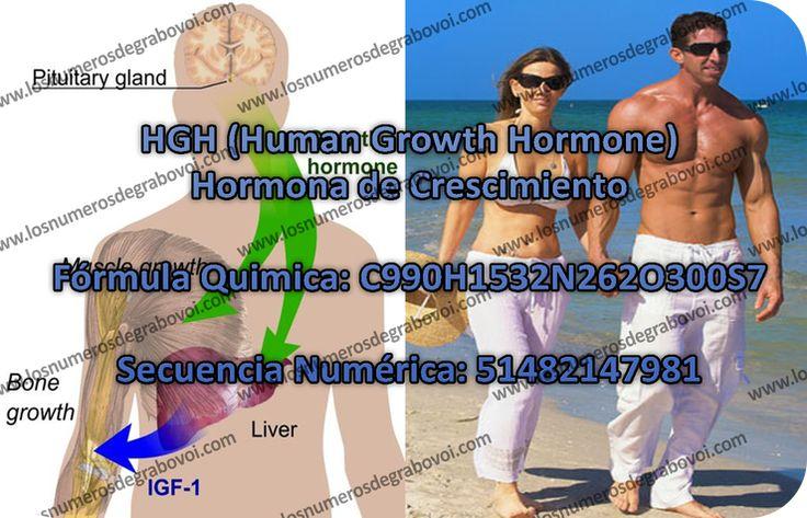 La horma del crescimiento HGH (por su definición en Ingles: Human Growth Hormone), se produce por la glándula pituitaria in grandes cantidades durante la adolesencia y niñes, es responsable por pro…